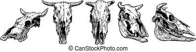 cow and bull skull set. - Vector illustration set of bull...