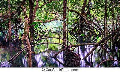 Tree roots in Cape Tribulation rainforest - Fig tree roots...