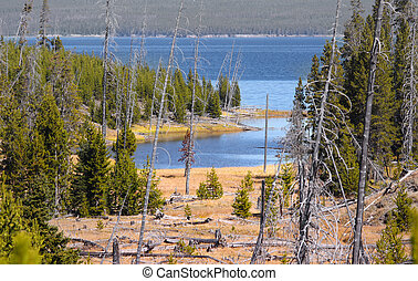 Yellowstone national park - Lake Yellowstone landscape in...