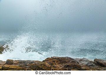 Foggy Morning on Schoodic - A morning fog lays over the...