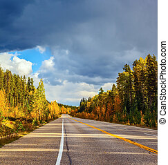 Road and yellow autumn forest