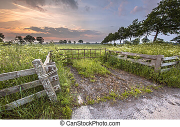 Gate to meadow decorated with Cow Parsley flower (Anthriscus...