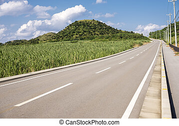 Road beside sugarcane field - Road beside green sugarcane...