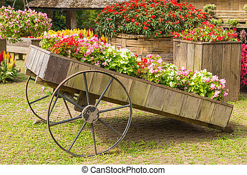 Colorful of petunia flowers on trolley or cart wooden in...