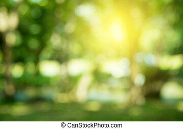 ensolarado, abstratos, verde, fundo, natureza
