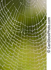 spiderweb - a spiderweb with raindrops