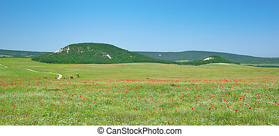 Green meadow and spring flowers in mountain. Composition of...