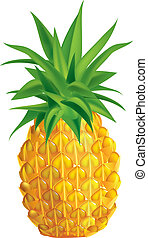 Pineapple - Vector illustration of ripe pineapple