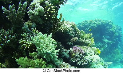 Diving near Coral Reefs in the Red Sea, Egypt. Beautiful...