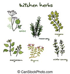 fresh kitchen herbs - Set of vector hand-drawn fresh kitchen...
