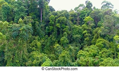 Tropical forest. Go backwards. Aerial. Thailand.