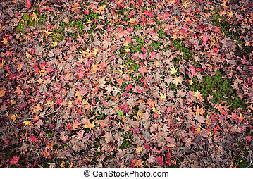 Colorful backround image of fallen autumn leaves for background