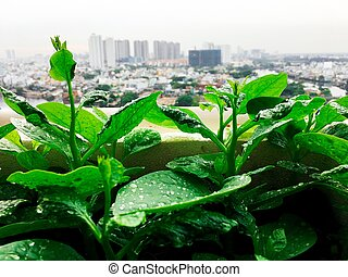 Vegetables mini garden farm on rooftop in urban city