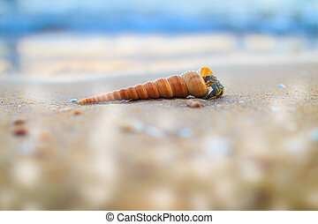 hermit crab on sand at the beautiful beach