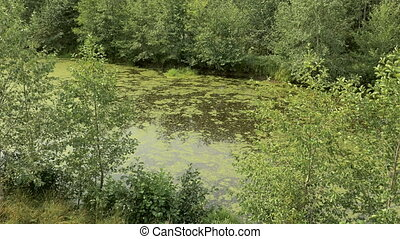 Swamp in the national wildlife reserve. Autumn daytime....