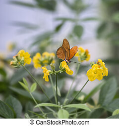 Julia butterfly lepidoptra nymphalidae butterfly on vibrant...