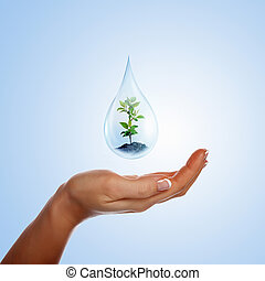 large drop of water - A large drop of water with sprout...