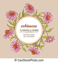 echinacea vector frame - echinacea flowers vector frame on...