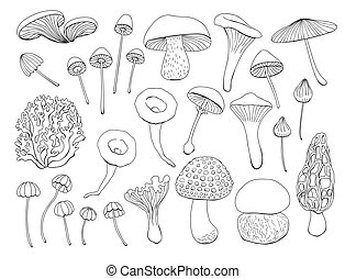 Collection of various mushrooms - Collection of various hand...