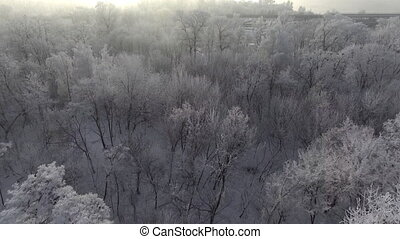 Trees in the snow, span a top view of the sun shines
