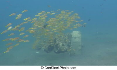 Sardine School in the Red Sea.