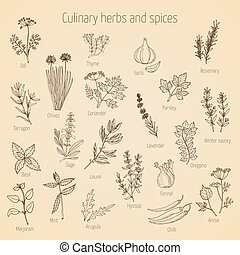 Set of culinary herbs and spices - Hand drawn set of...