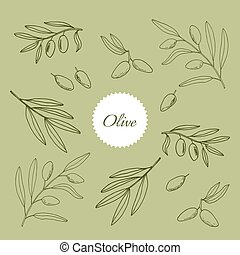 Set of olive branches