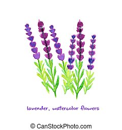 Watercolor lavender collection - Watercolor lavender. Hand...