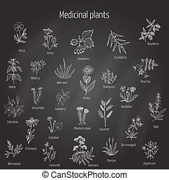 hand drawn medical herbs and plants. - Vintage collection of...