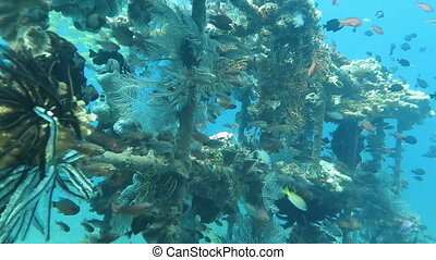 Thriving coral reef alive with marine life and shoals of...