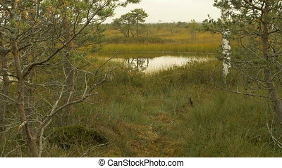 Pond in the national wildlife reserve. Autumn daytime....