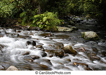 Forest stream - Stream flowing in lush New Zealand tropical...
