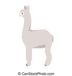 Vector flat style illustration of lama. Icon for web....