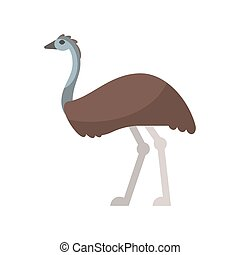 Vector flat style illustration of emu. Icon for web....