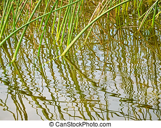 Reflection of reeds in water with ripples.