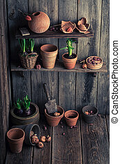 An old shed with clay pots and spring on plants