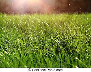 Green grass sunlight close-up growth concept