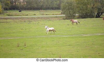 Herd of running horses. Nature