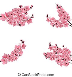 Set of flowering branches with a pink cherry. Buds. Sakura. Isolated on white background. illustration