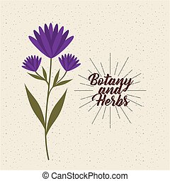 botany and herbs design