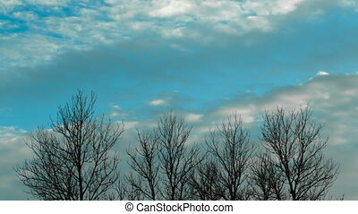 Movement of clouds on a background of trees. Time lapse video