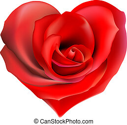 rose heart - red valentine heart made with rose flower