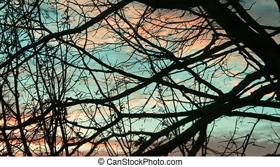 Dry tree branches against the sky. Time lapse video. - Dry...