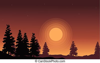 Silhouette of spruce scenery at sunset