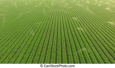 Irrigation Sprinklers Farm Field Food Crops Agriculture