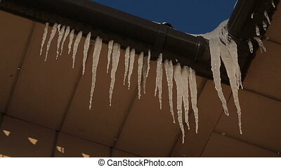 Many icicles hanging on house roof. Video full hd.