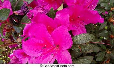 Mexicano - Flor silvestre