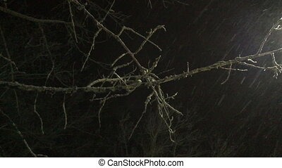 Tree branch on the snow falls at night.