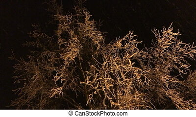Icy tree branches sway in the wind at night.