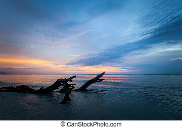 Textured dead tree in the sea at sunset
